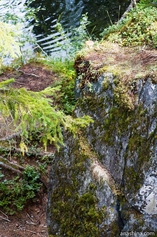 Камень с грибочком, водопад Ахвенкоски, Рускеальские водопады