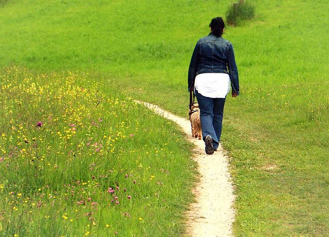 引っ張らずに散歩している犬