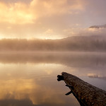 8. September 2018 - 7:24 - Takhlakh Lake, Mt. Adams, Gifford Pinchot National Forest, WA  Another sunrise shot.  I woke up when someone had slammed their RV door, and when I opened my eyes and looked out the back window of our tent, I saw the sky was a bright, bubble-gum pink.  All sleepiness left me and all I could think was 'Dang it, I should have set my alarm!'.  I hurtled out the tent letting my husband continue to sleep, grabbed the dog so he wouldn't bark or whine while I was gone (he is such a mamma's boy), grabbed my camera and tried as quickly as possible to make it to the lake's edge.  When we got there, a heavy mist lay over the lake and while the pink color had gone, there was instead an ethereal golden glow.  By the time I tied Samwise to a small bush and got my camera ready the mist was mostly lifted and I could see the mountain in the background.  The rich golden color was just incredible.  This first morning I was the only person I could tell to be on the lake shore taking pictures.  The following morning (www.flickr.com/photos/gwennyma/30826079438/in/dateposted/) there were others and I ended up in the same spot with the same log in my shots, not really giving me a chance to diversify my scenes, but both mornings were unbelievably beautiful in very different ways and I am so thankful I woke up just in time for both (and without using an alarm clock). After about 10 minutes I couldn't do my potty dance anymore and made my way back to camp so I could answer the call of nature and get some coffee.