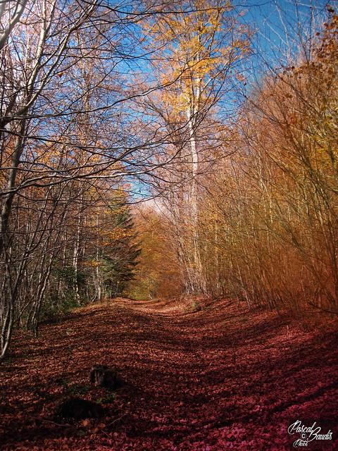 Couleurs d'automne, fallcolors, Canon POWERSHOT A1100 IS, 6.2 - 24.8 mm