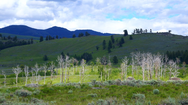 IMG_8297 Petrified Trees Trail