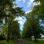 Tree canopy at Haslam Park, Preston