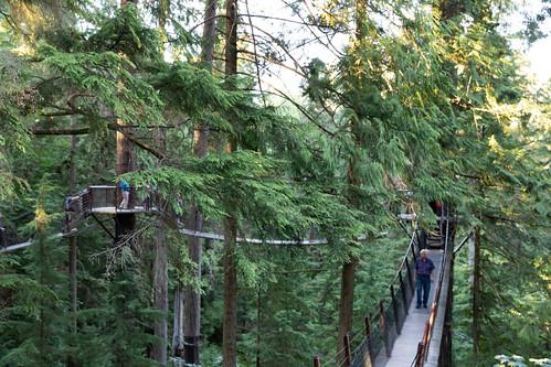 Capilano Suspension Bridge treetop Vancouver Canada