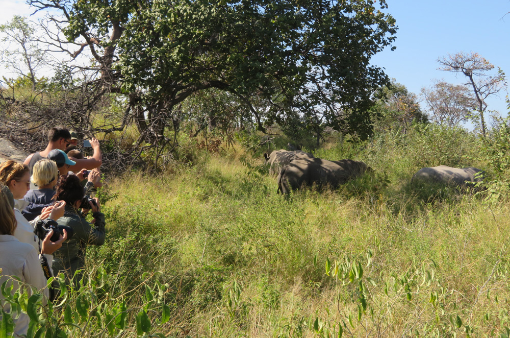 tourists-photos-rhinos