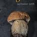 Peny bun by Keith Gooderham