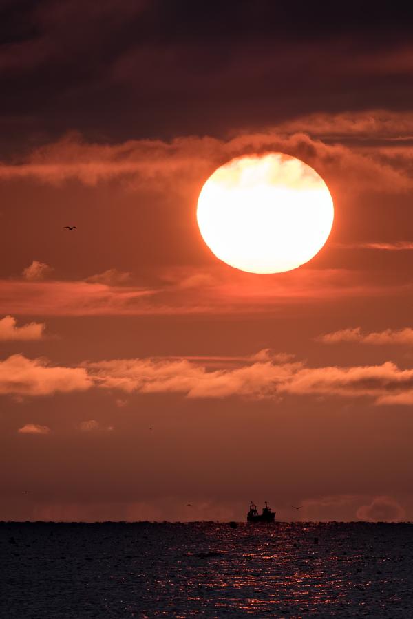 Soleil et sa moumoutte 43812597864_4a35a58f26_o