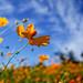 Fresh autumn sky by shinichiro*