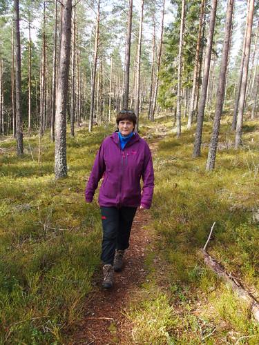 SÖ E15 Orörd skog