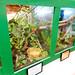 Bugs & beasties: Chameleons, frogs