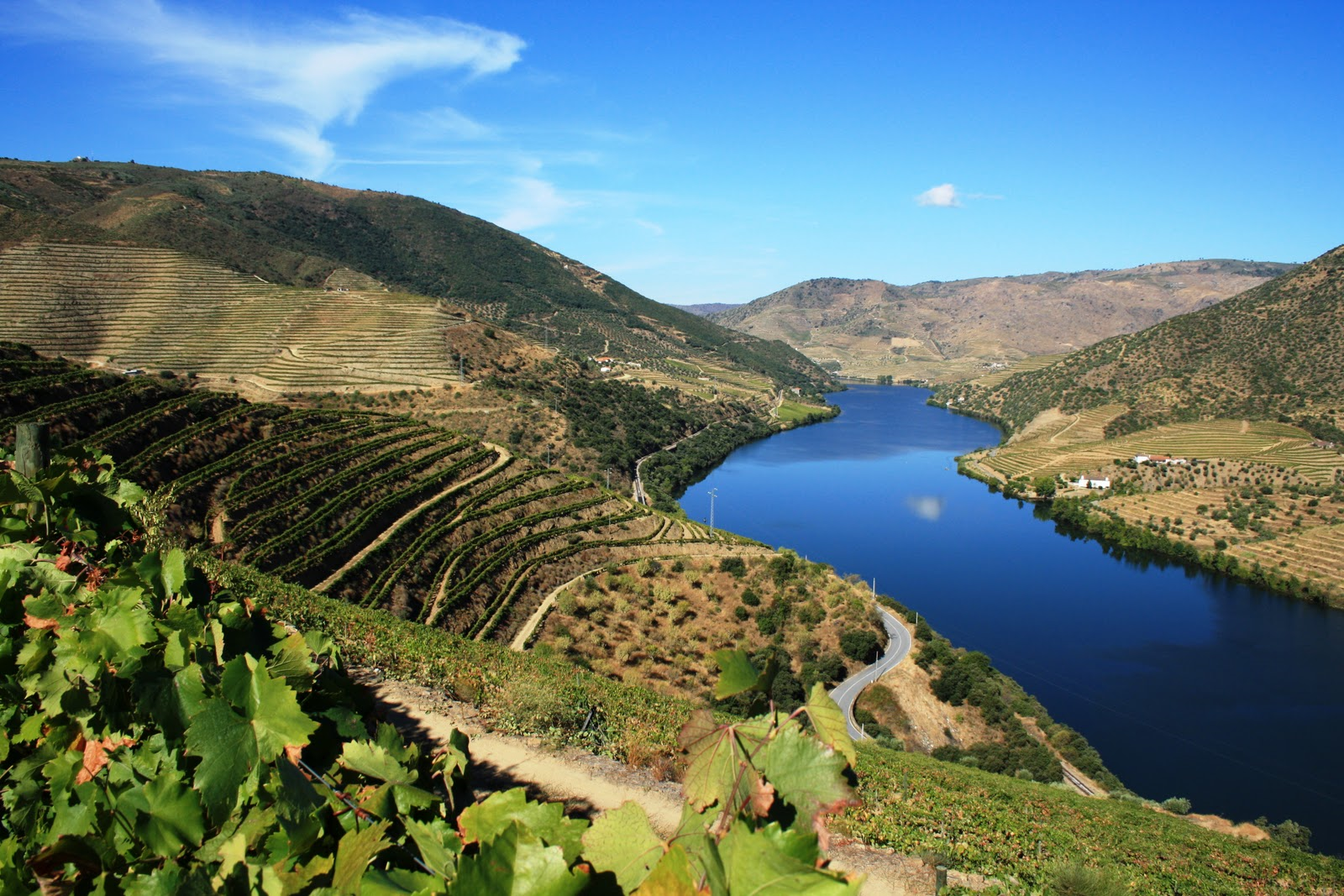 Vineyards in the Douro Valley of Portugal