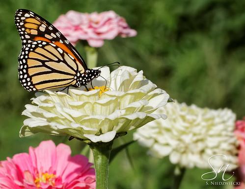 Monarch 8376-14