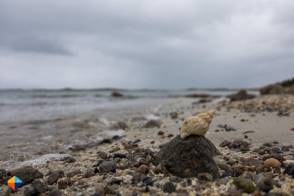 Beachlife II