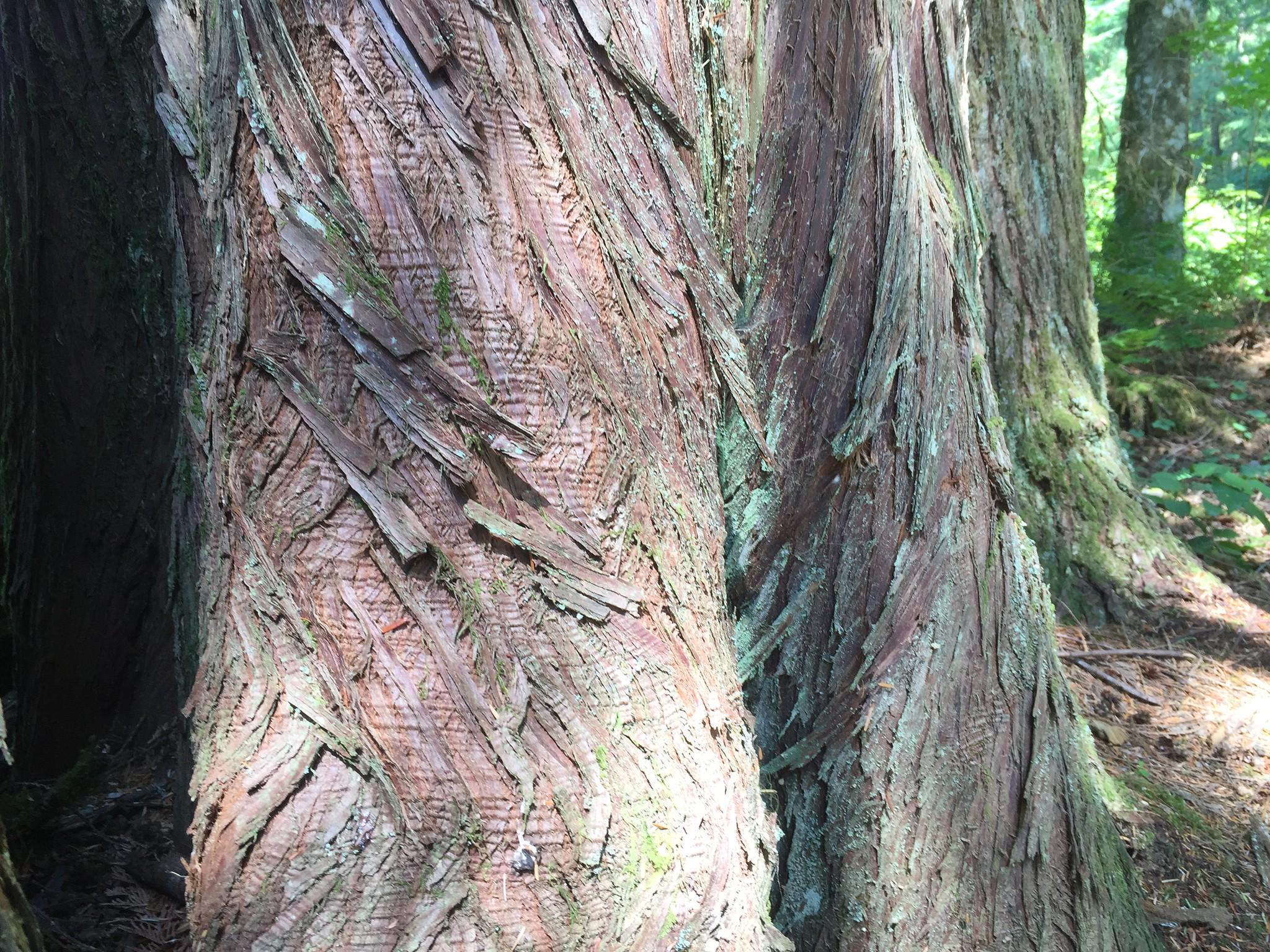 Woven Bark