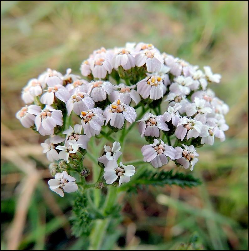 Касарги 8678 Flores