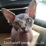 [Reunited Via Other Site] Sun, Sep 16th, 2018 Lost Female Cat - Beechlawns, Ratoath, Meath