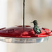hummingbird_feeder-20180819-106