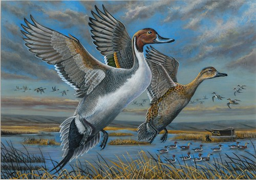 2018 Federal Duck Stamp Contest Entry 026