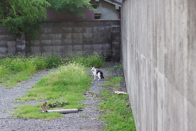 Today's Cat@2018-09-06