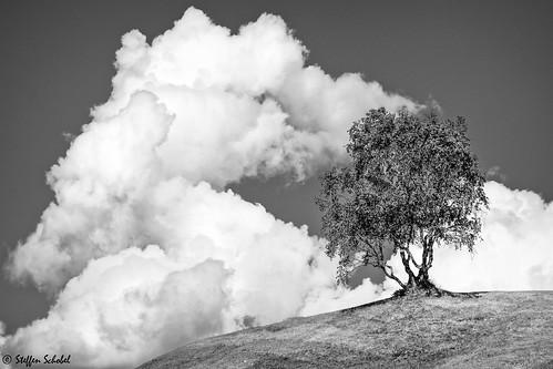 Bizarre tree meets clouds / Baum trifft auf Wolken