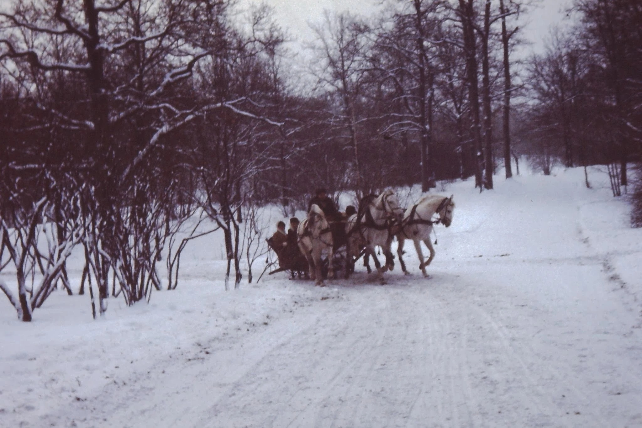 Поездка на русской тройке по дорогам в парке ВДНХ