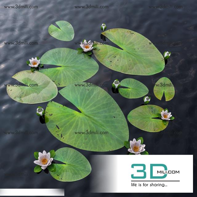 422lotus flower 3dsmax file free download 3d mili download 3d lotus flower 3dsmax file free download 3d mili download 3d model free 3d models 3d model download mightylinksfo