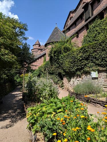 Château du Haut-Kœnigsbourg gardens
