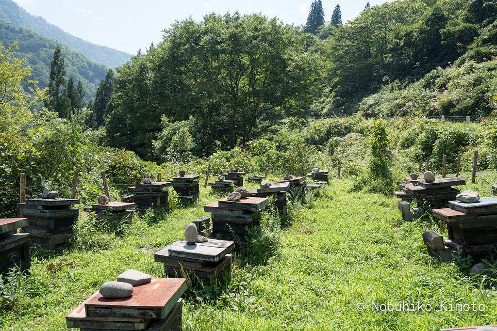 石垣田の作品、蜂箱の作品、結東のもうひとつの作品