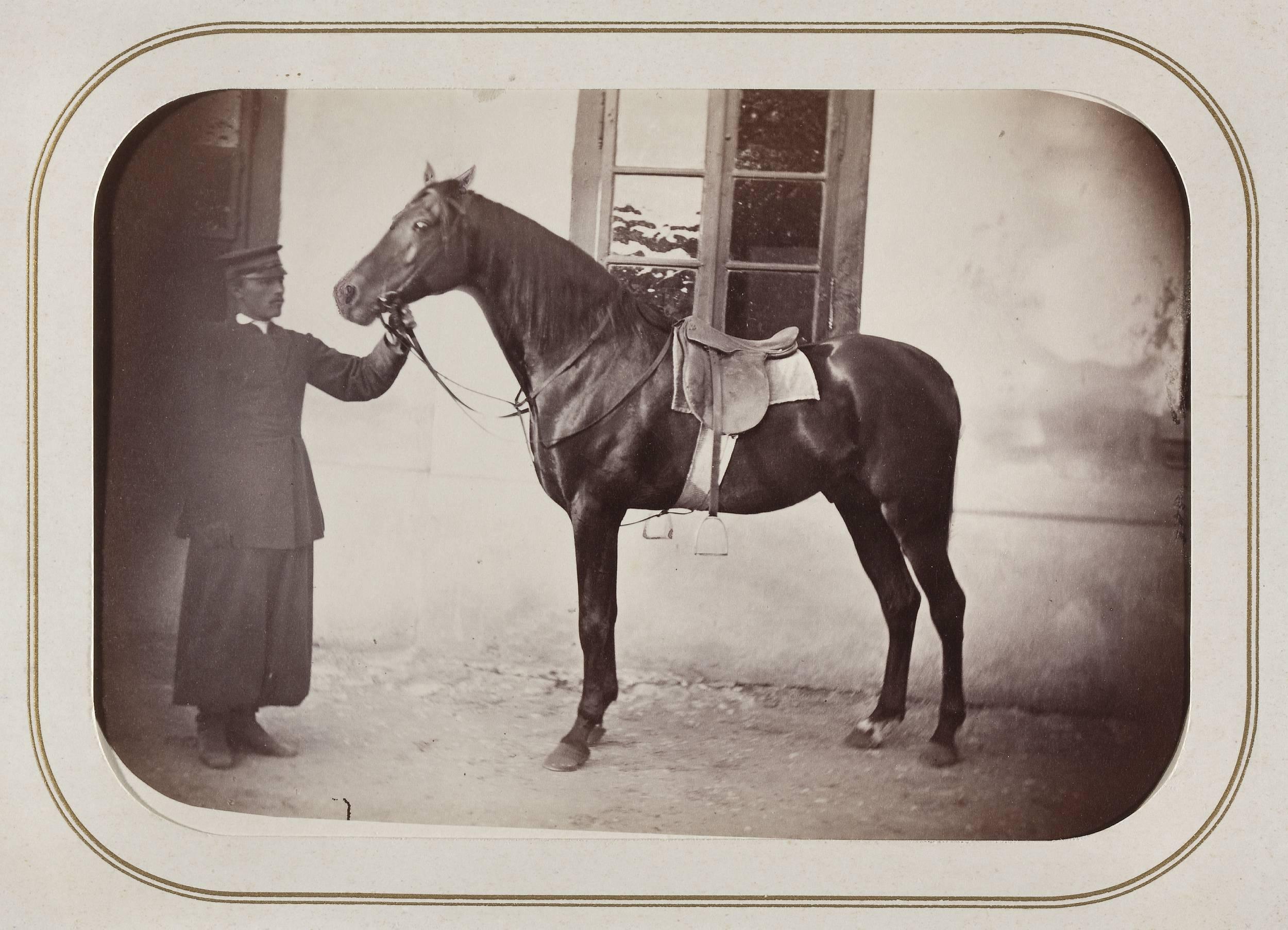 Черный конь Дачсам