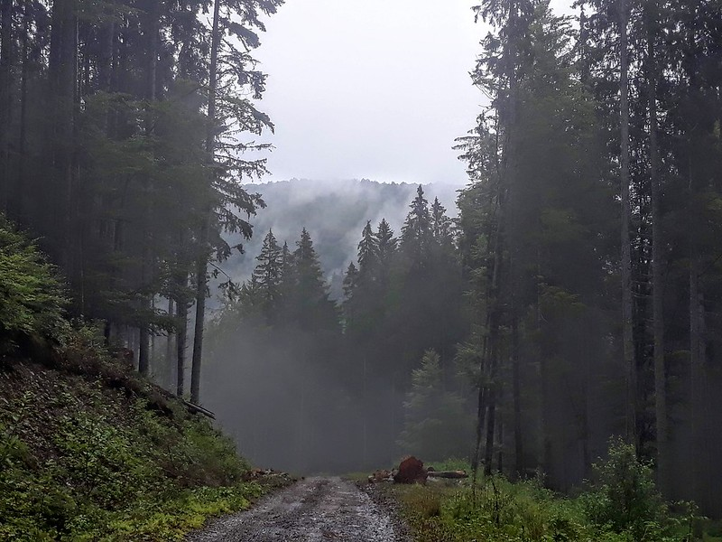 Drumetie in Azuga, Muntii Baiului