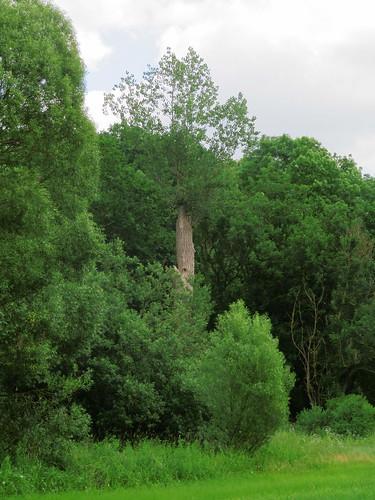 20180618 14 358 Baltica Wald Baum Weide