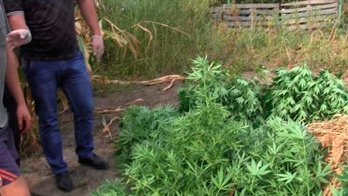 Обшуки, щодо зберігання наркотичних засобів