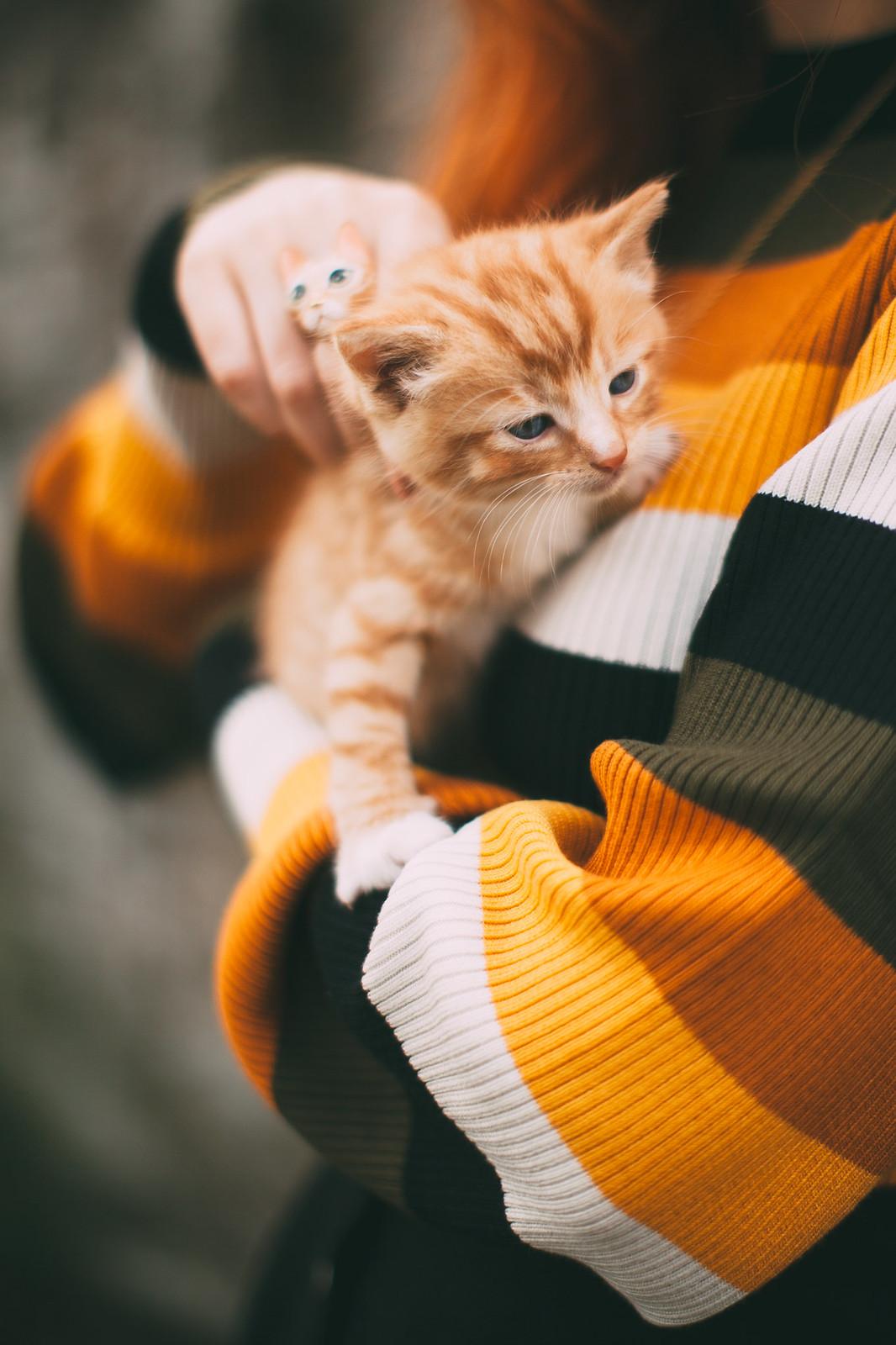 ginger kitten-9