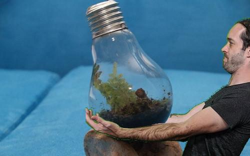 Meow holding lightbulb terrarium