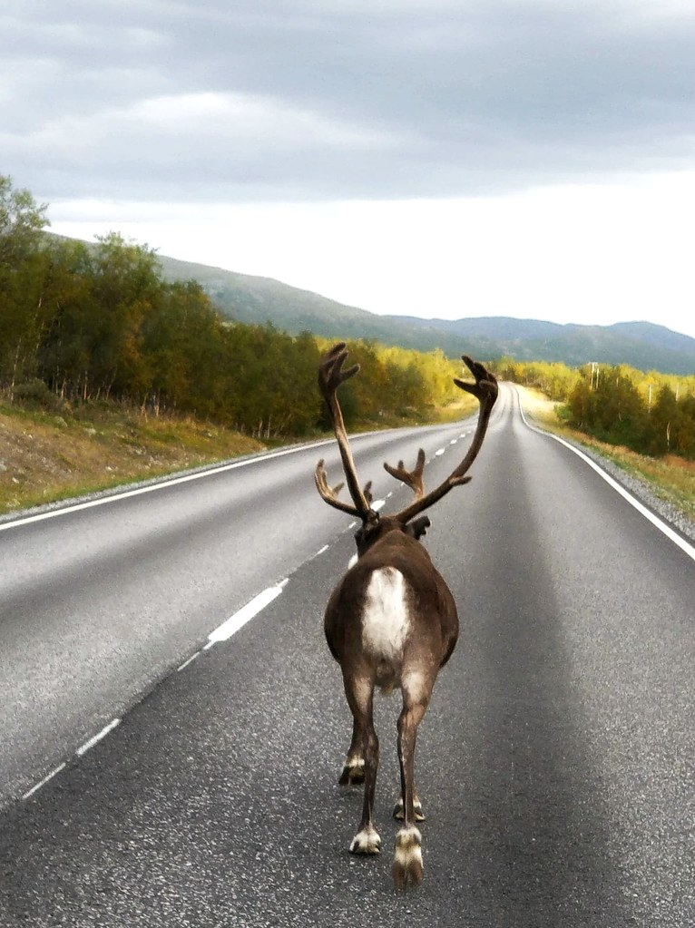 kilpisjärvi roadtrip blogi
