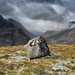 Glacial Remains by David Cudworth