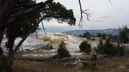 Upper Terrace Mammoth Hot Springs, Yellowstone NP