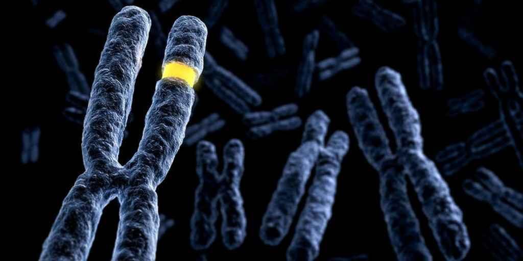Pourquoi les scientifiques étudient-ils une petite partie des gènes ?