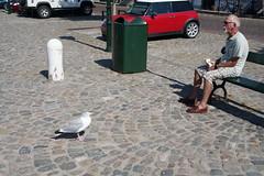 Sea Gulls at Veere (7)