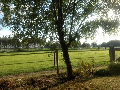 Uitzicht vanuit de bed & breakfast Jannie Hoeve Westdorp