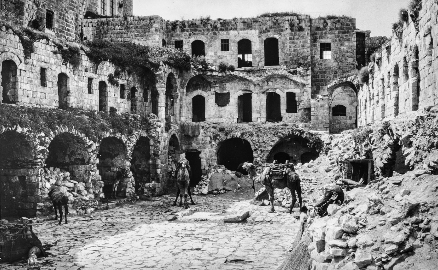 Верблюды среди руин