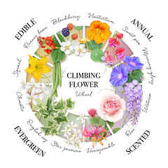 Flower choices for your garden arch