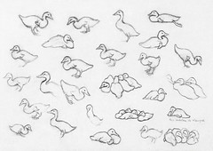 Study sketch of ducks by Julie de Graag (1877-1924). Original from the Rijks Museum. Digitally enhanced by rawpixel.