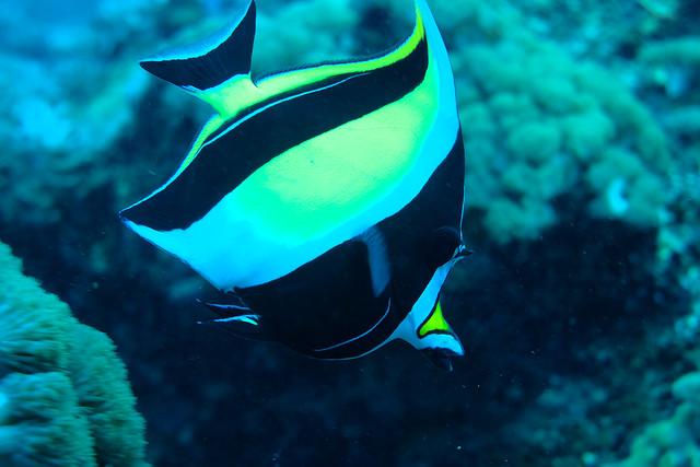 I help clean sunfish, Fujifilm X-T20, XF35mmF1.4 R