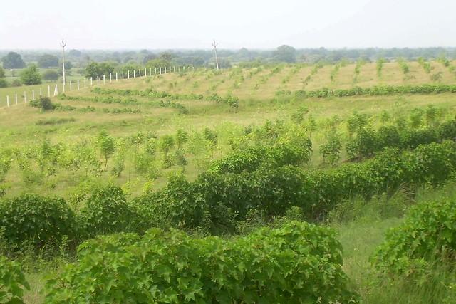 आदिवासियों के प्रयास से हरा-भरा हुआ जंगल