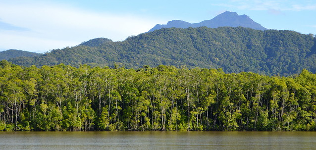 Daintree Mangroves