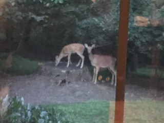 Despite its blurriness, I love this pic because one of them is standing on the tree stump.
