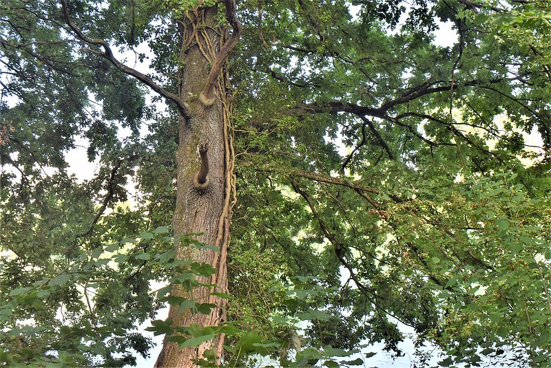 Trees 27.08 (2)