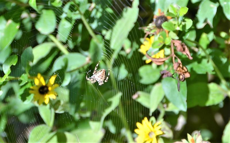Spider 04.09 (3)