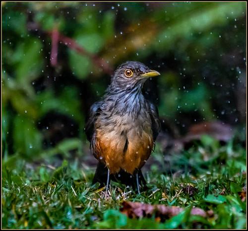 Llueve.