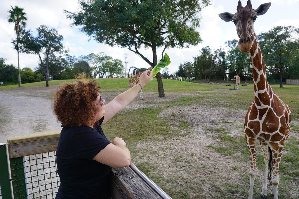 Feeding Giraffes on the Serengeti Safari® Tour at Busch Gardens Tampa Bay, Fla., Dec. 2016